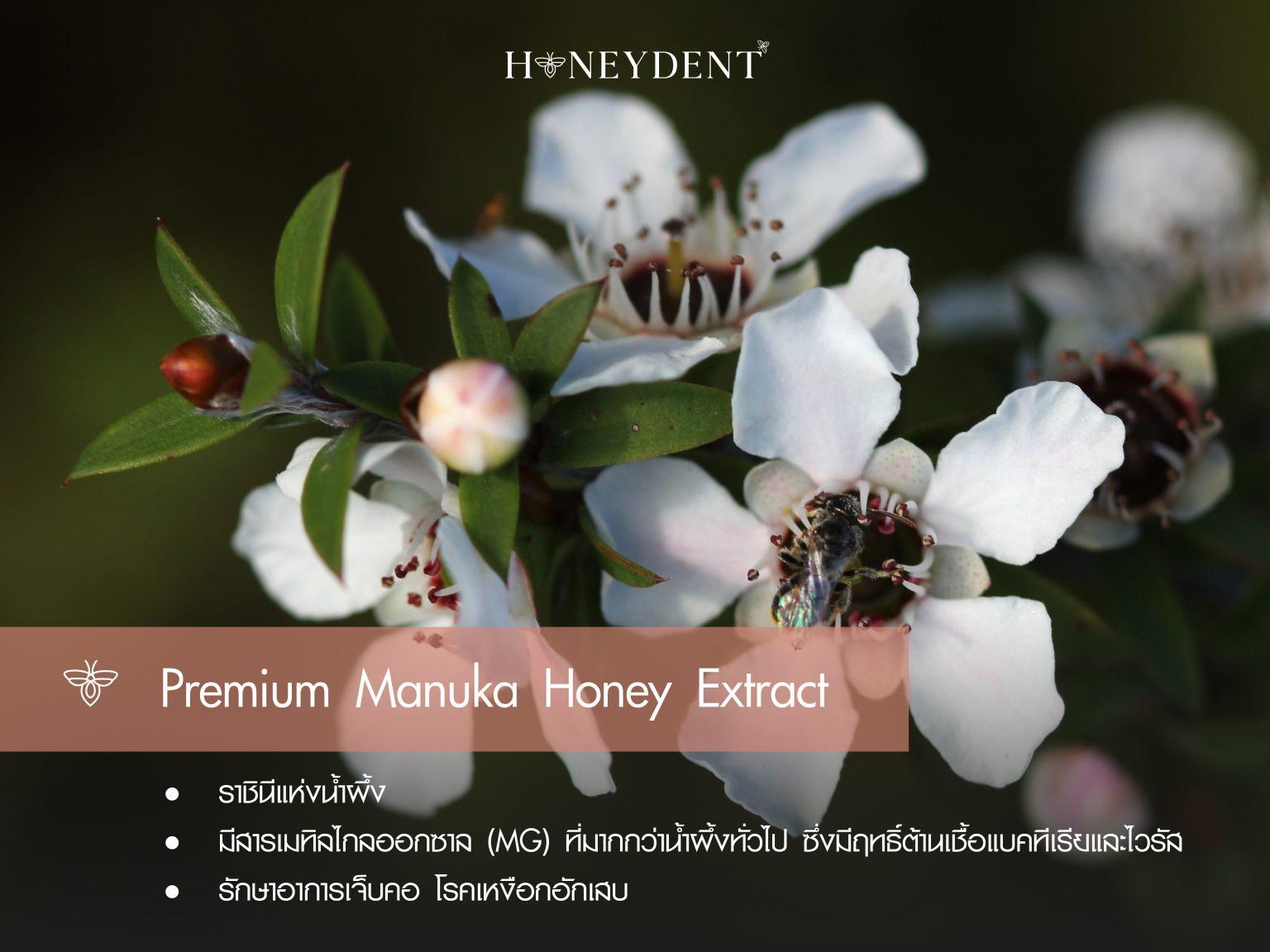 Premium Manuka Honey Extract