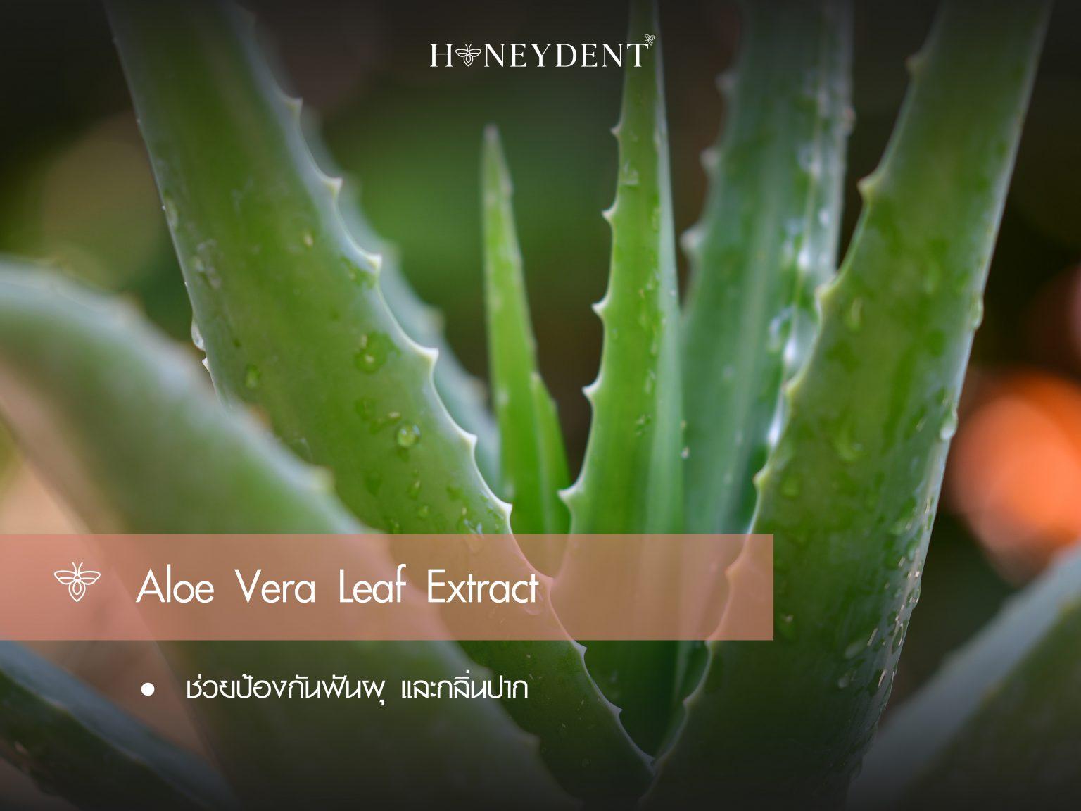 Aloe vera leaf extract