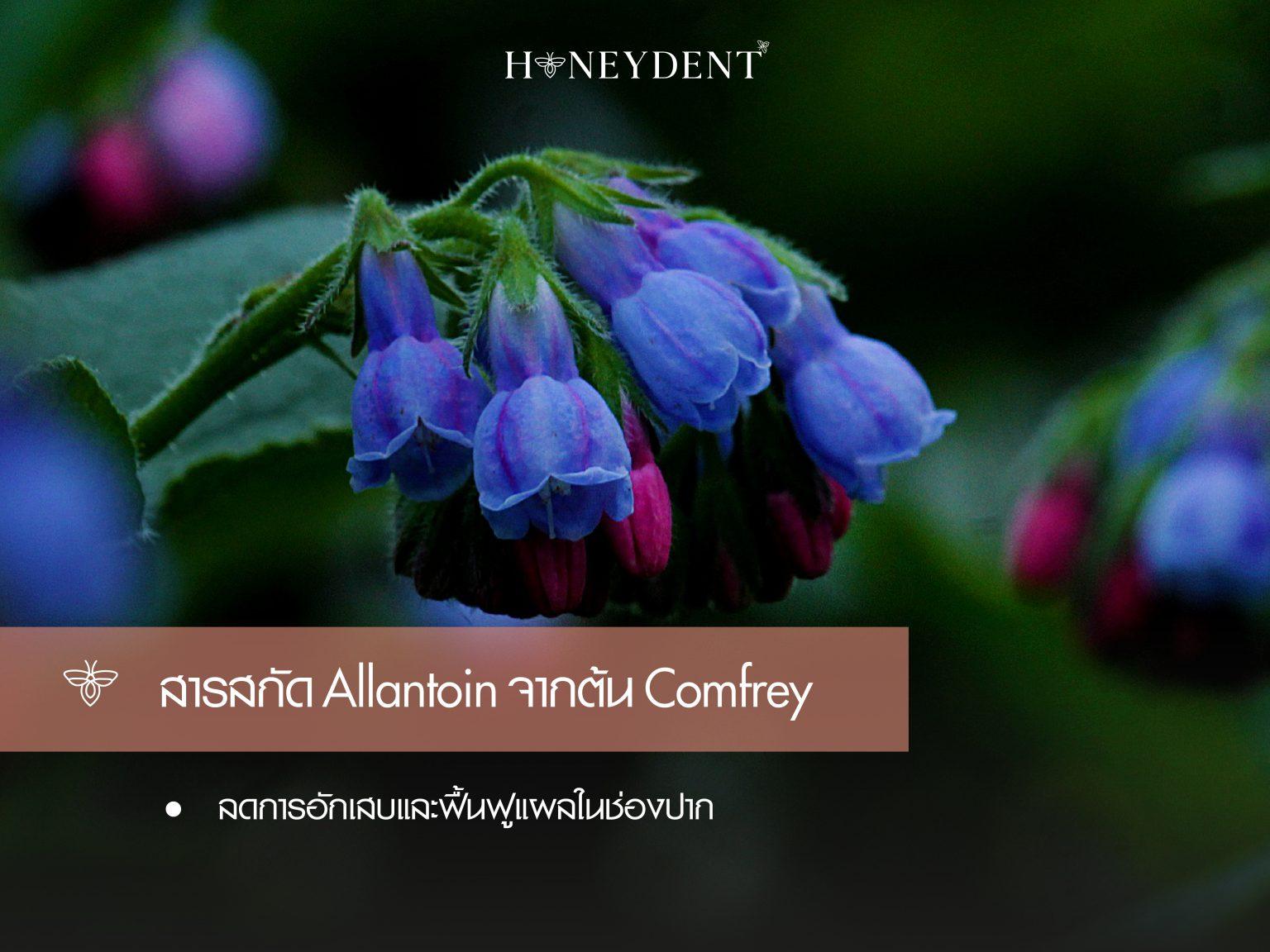 สารสกัด Allantoin จากต้น Comfrey